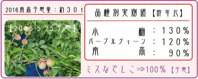 2016梅作柄状況【2次生理落果期】 【2016.5.25】 和×夢 nagomu farm