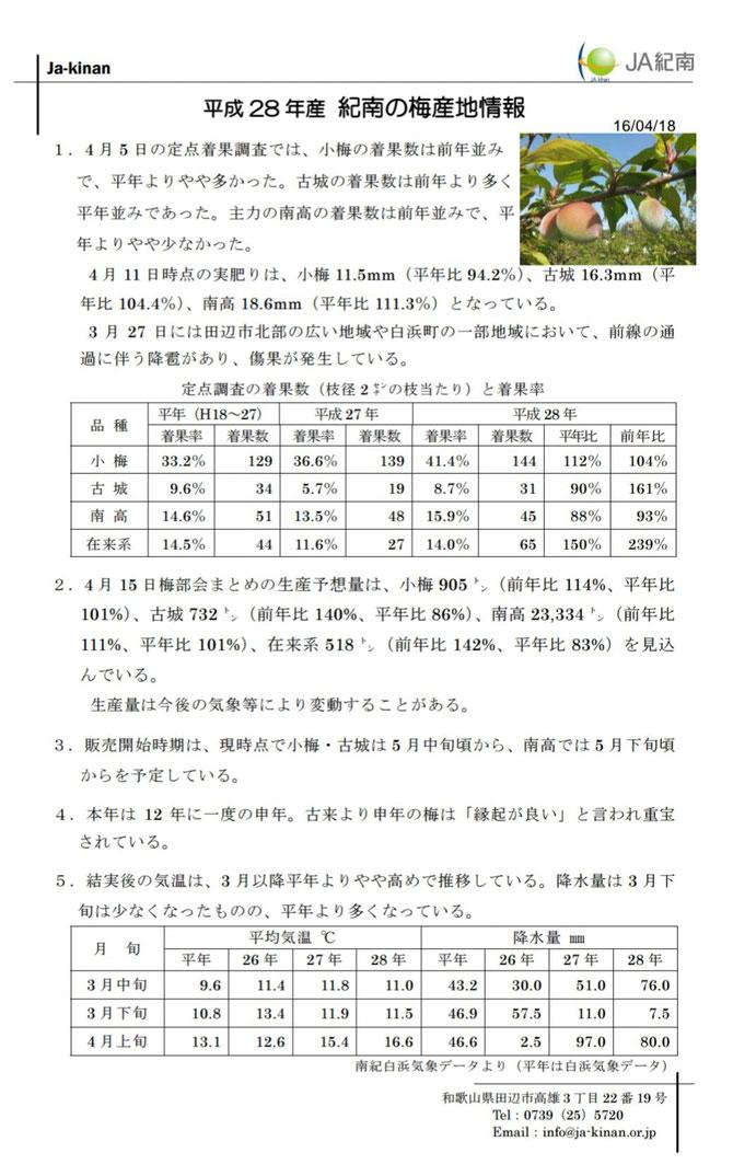 JA紀南梅産地情報【4/18】 出典:JA紀南ホームページ