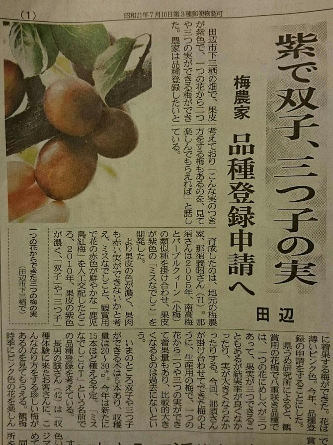 紫で双子、三つ子の実 田辺 梅農家 品種登録申請へ