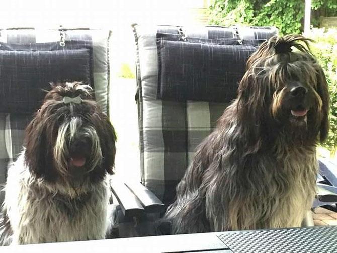 links Bella, rechts Bella ihr Weggefährte Asco