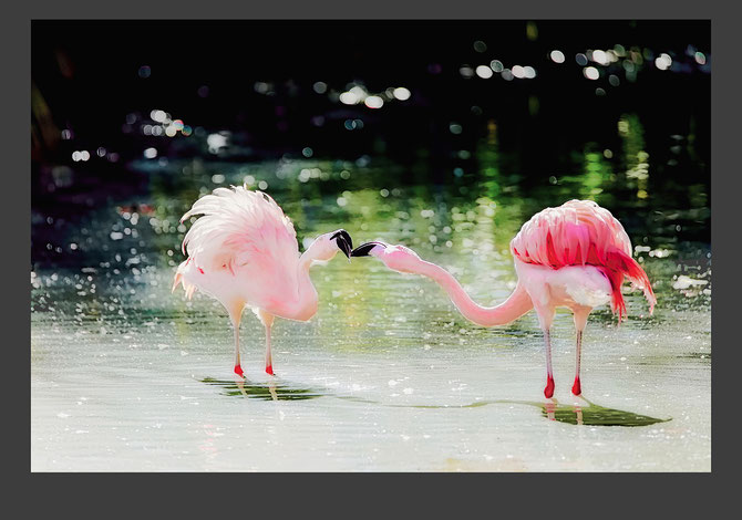 """ Flamingo Love ""  Photo Print by Roland Carlos"