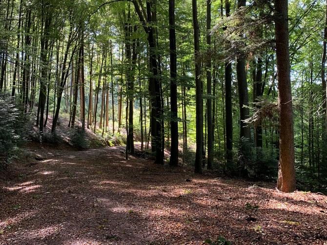Bunter Wald auf Herbstwanderung im Schwarzwald