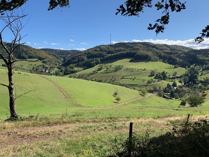 Blick aufs Brettental bei Freiamt im Schwarzwald