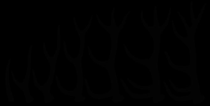 Croissance d'un bois de cerf de 1 an (à gauche) jusqu'à 7 ans tout à droite. Il suffit de compter le nombre de pointes ! Sources: wikipédia.