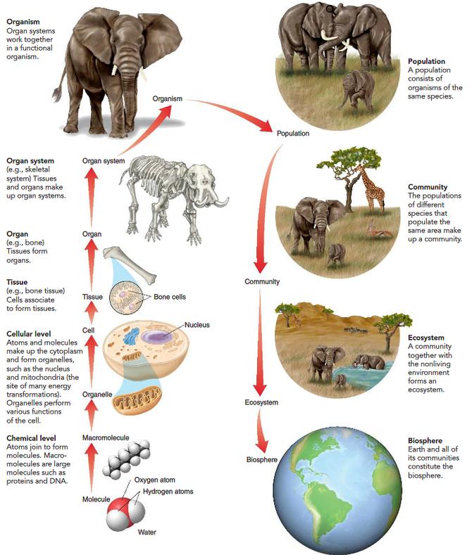Les principales échelles pour appréhender le monde vivant. Source: internet.