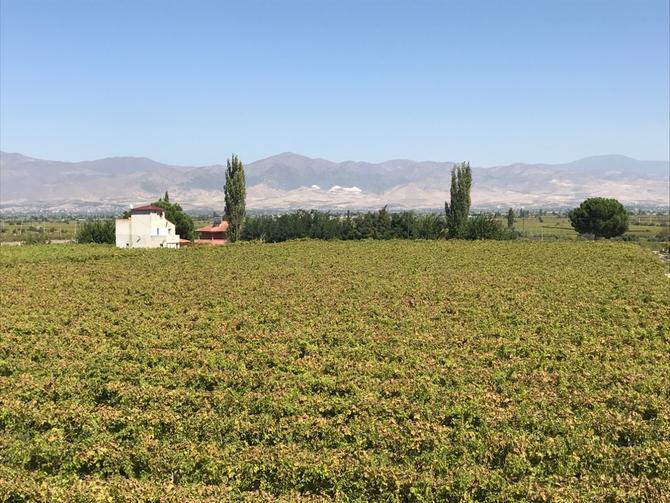 Weintrauben- und Paprikafelder bei Alaşehir