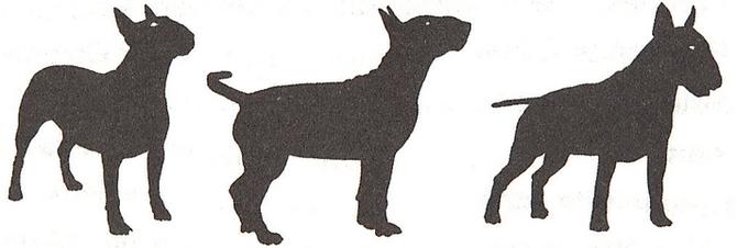 Las diferentes siluetas de Kiwi que ilustra los títulos de los capítulos.