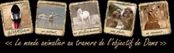 """1ère expo lgDAMSphoto : """"Le monde animalier au travers l'objectif de Dams"""", mars avril 2016 à Clamart (92)"""