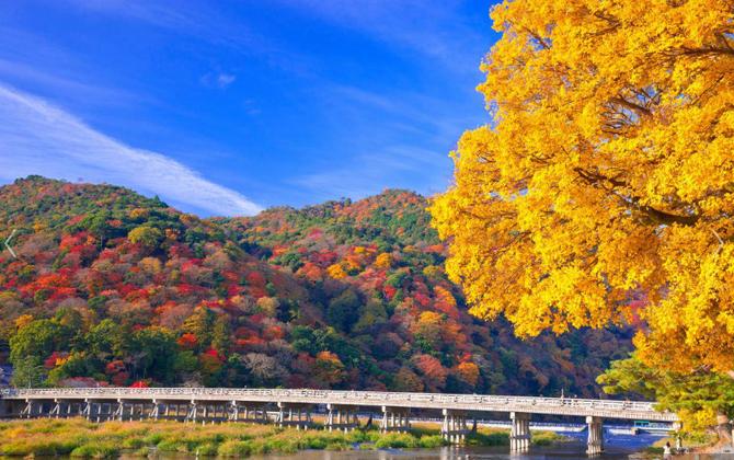 AUTOMNE à ARASHIYAMA la Montagne de la Tempête (Ouest de Kyoto). EMBRASEMENT DES ERABLES - momiji -  SUR  TOGETSU-KYÔ.