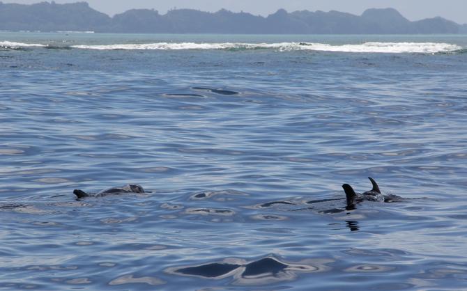 オキゴンドウクジラ Photo by Nakashoji Shigeki