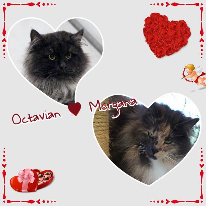 Morgana e Octavian cucciolata nata il 06 Maggio