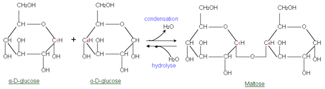Glycosidic linkage of two glucose molecules