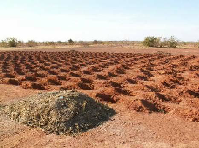 A compost heap (foreground) with 'Geometrical replication' of Zai pits (background) in the Sahel- there are many possibilities of designs