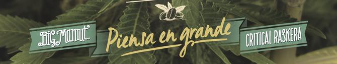 semillas marihuana con garantia, semillas marihuana bigseeds, conservacion semillas marihuana, fecha produccion semillas marihuana