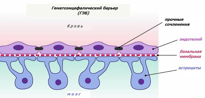 гематоэнцефалический, мозг, нейроны, серотонин