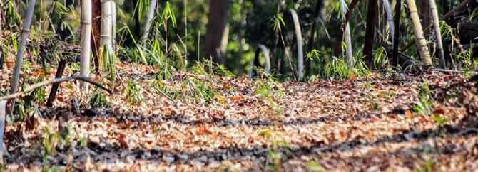 暖かな林床  生き物調査コース