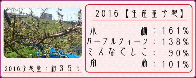 2016梅生産量予想 【2016.4.5】 和×夢 nagomu farm