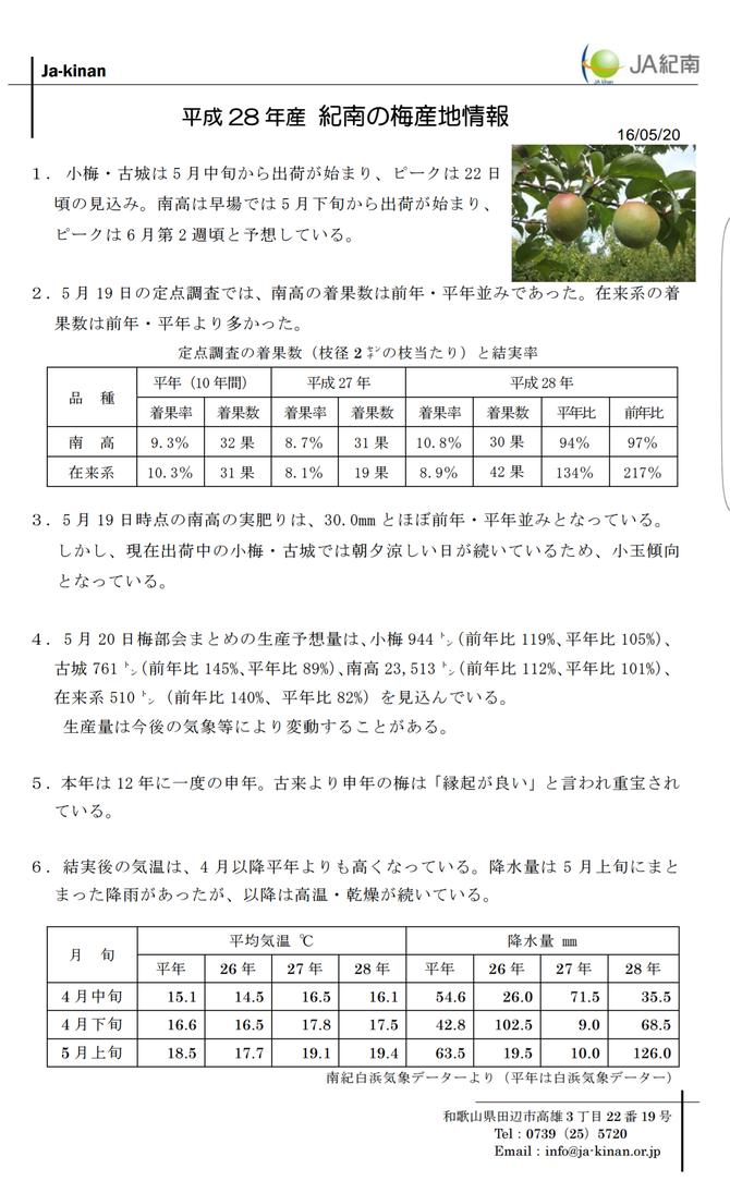 JA紀南梅産地情報【5/20】 出典:JA紀南ホームページ