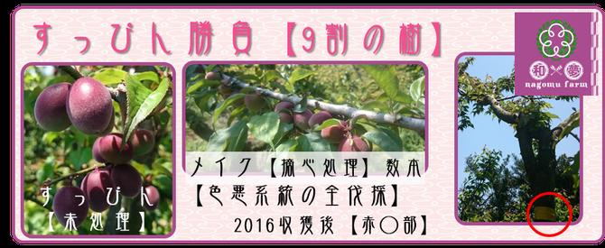 すっぴん勝負 ミスなでしこⓇ 【2016】 和×夢 nagomu farm