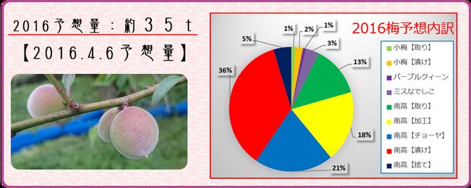 2016梅作柄状況【1次生理落果期】 【2016.4.20】 和×夢 nagomu farm