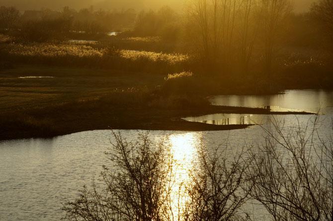 Nachmittagsstimmung auf der Vogelinsel am Altmühlsee, 02.12.2013, 15:57 Uhr