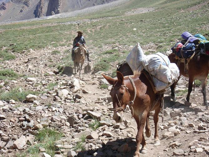 Das Gepäck bis 30 kg pro Person wurde von Maultieren (Kreuzung zwischen Pferdestute und Eselhengst) zum Basislager transportiert
