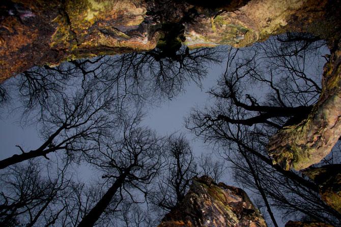 Baumwipfeltreffen aus einer Baumruine heraus gesehen, 02.01.2012