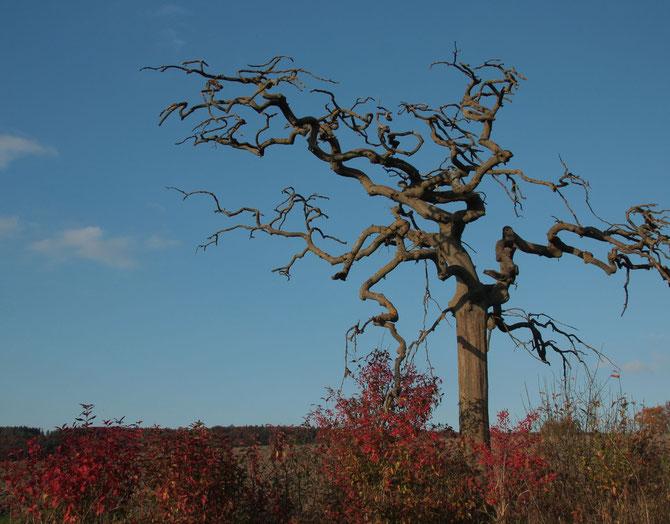 Dürrer unbekannter Baum bei Unterhegenau, 24.10.2013, 16:59 Uhr