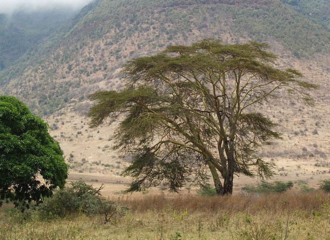 Ngorongoro-Krater, 02.10.2007