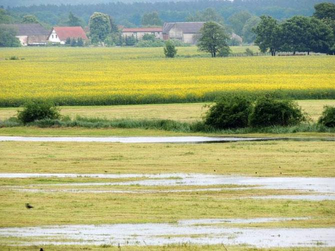 Ein Blick von Gehrendorf nach Lockstedt