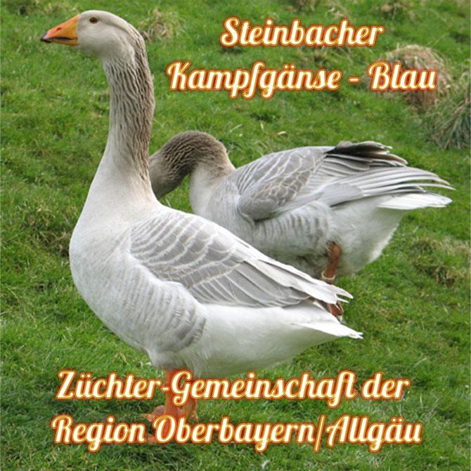 Anlässlich der hervorragenden Zuchterfolge im Jahr 2012/2013 geben wir noch blaue und graue Steinbacher mit guten Rassemerkmalen aus Naturbrut ab.