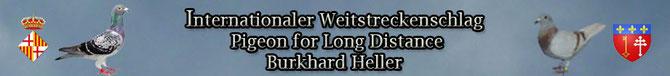 Heller Burkhard Steinstr 95 52249 Eschweiler Phone:(0049) (0)2403/35739 Mobile.(0049) (0)15774075466 E-Mail : buggy-63@web.de Germany