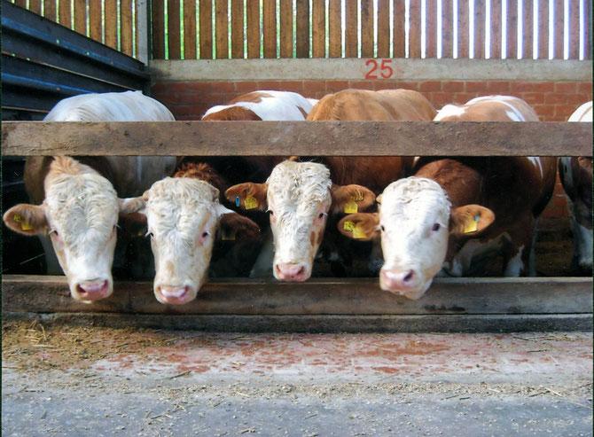 Tiergesundheit durch fachgerechte Beratung vor Ort.