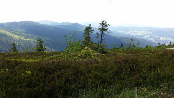 Gipfelplateau des Arbers