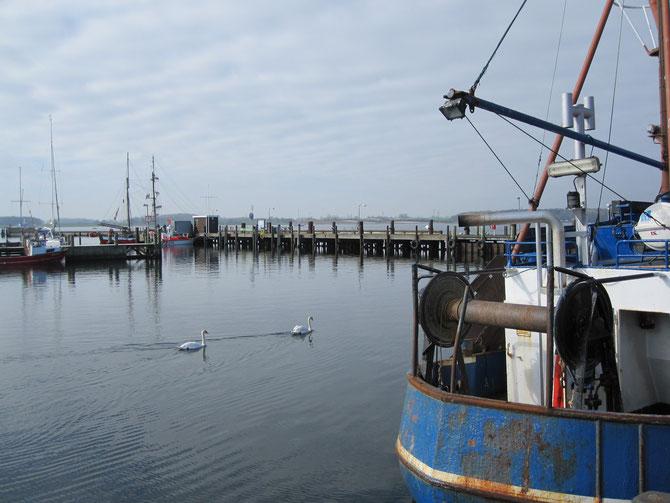 Hafen, Maasholm