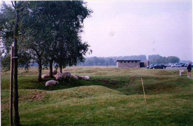 Le parc de 100 hectares qui entoure le monument(concédé par la France) en partie reboisé oû pâturent de paisibles moutons dans les trous d'obus