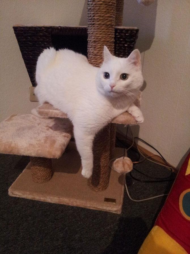 Tolle Katze 5e Draht Bestellen Bilder - Elektrische ...