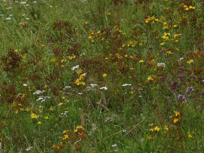 siehe Video: Lebensraum Streuwiese