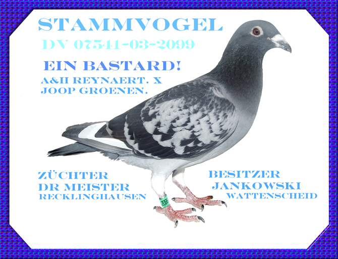 07541-03-2099 Züchter Dr.Meister  Recklinghausen