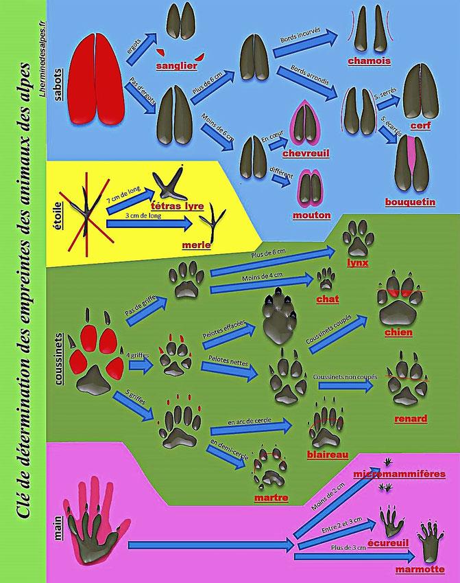 clé des empreintes des animaux des alpes