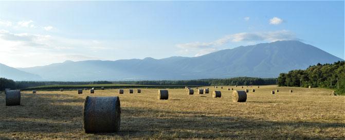 8月20日 小岩井農場の牧草地と岩手山。まだラップされてずに転がった干し草と岩手山が何とも奇妙にマッチするような。