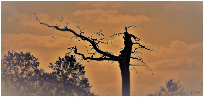 Der tote Baum