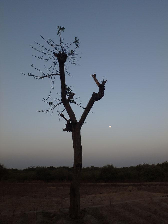 moon, Tumani Tenda