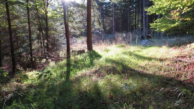 lauschiges Plätzchen Wald Frieden erholsam