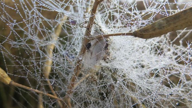 Kokon Spinne Beute