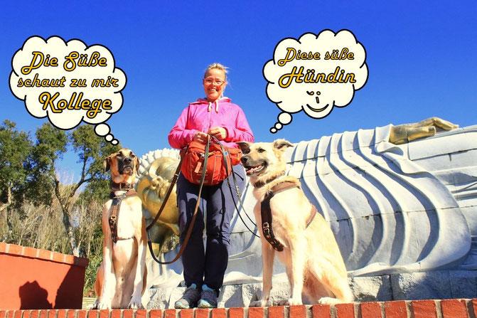 Hundetraining, mobile Hundeschule, urlaub mit Hund, Hundeschule