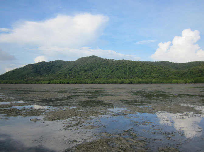 Here is a neat example of different ecosystems – terrestrial natural forest and rubber plantations, mangroves and seagrass – that exist adjacent to each other within the same catchment. Yao Yai Island, Thailand.