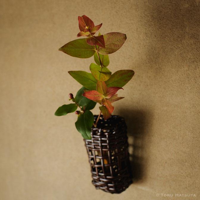 籐組掛花籠にオトギリソウ