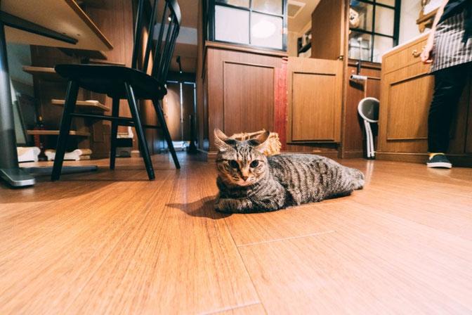 東京浅草の猫カフェにてパチリ