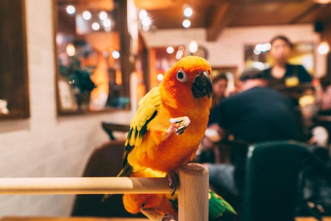 都内の「鳥カフェ」にて お気に入りのものは掴んだらなかなか離さない